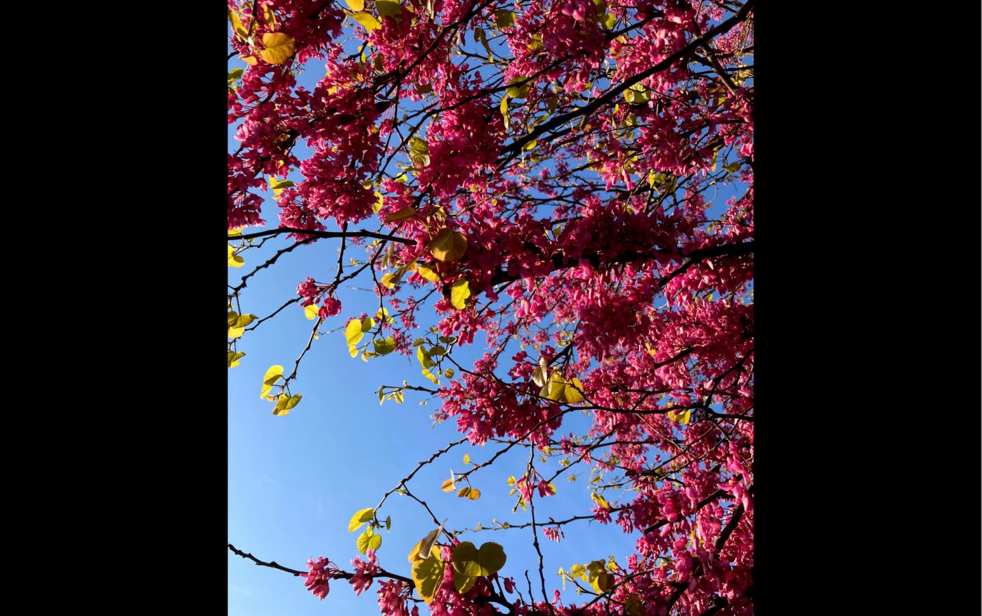 Spring nature walks in Italy --Angela Morelli