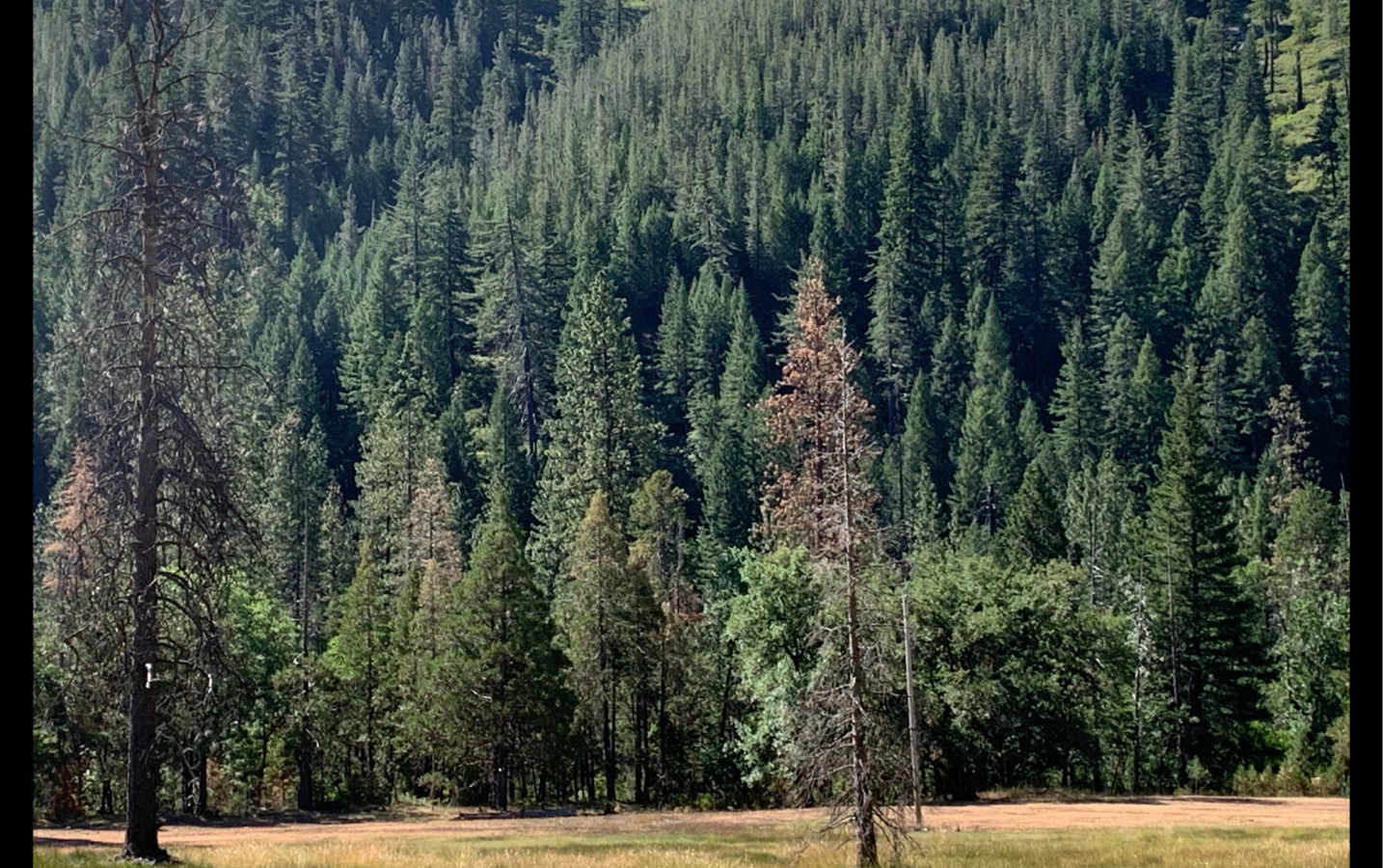 Enjoying a time out at Ripple Creek in the Trinity Alps. Trees, flowers, mountains, meadows, flowing water, and the best porch for reading. --Barbara