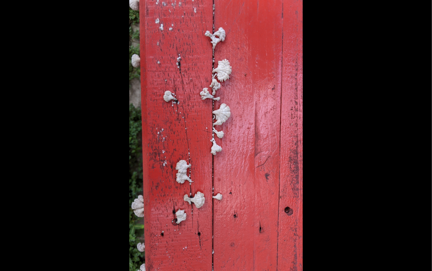 Mushroom on a red bench --anonymous community member
