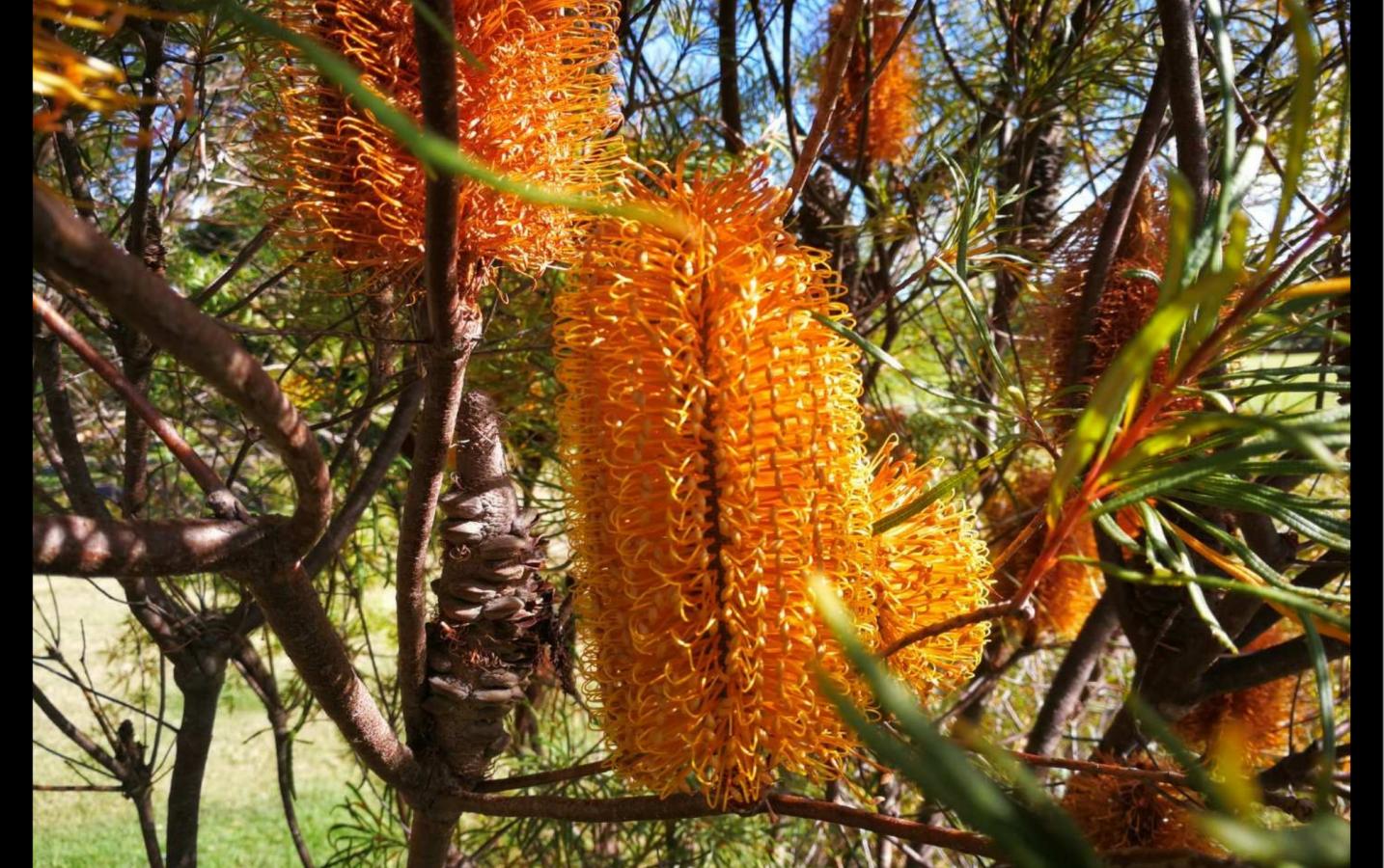 Flora and fauna in Gold Coast, Australia --Cliff Wang
