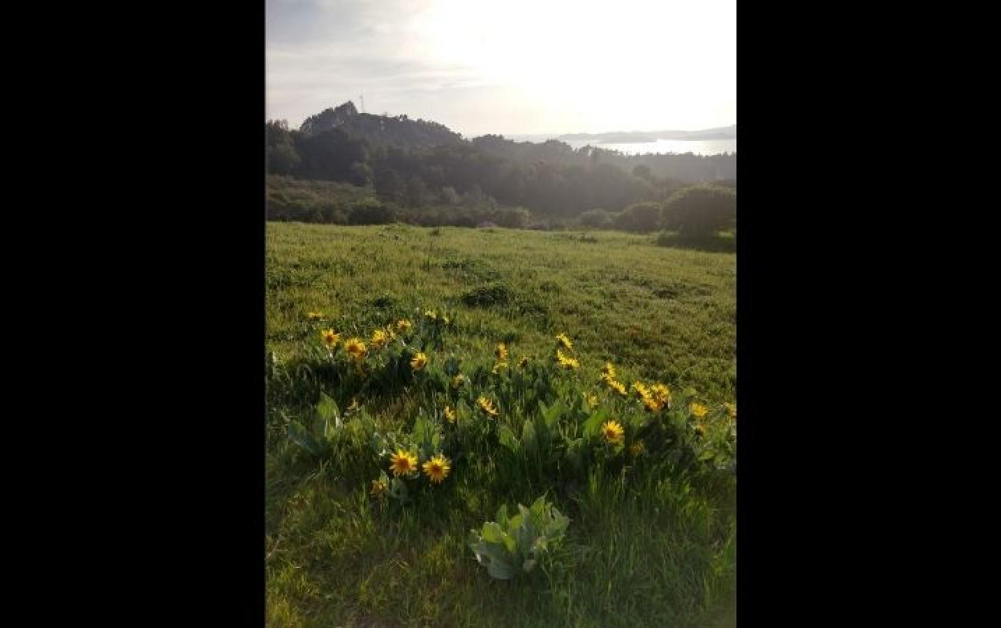 Meghan: Wildflowers at Tilden Park in Berkeley.