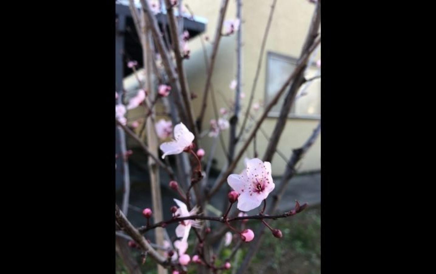 Nahelia: Spring :)